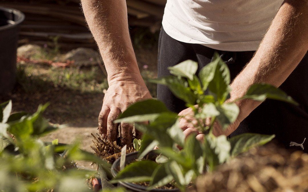 Zahl der Arbeitskräfte in der Landwirtschaft weiterhin rückläufig